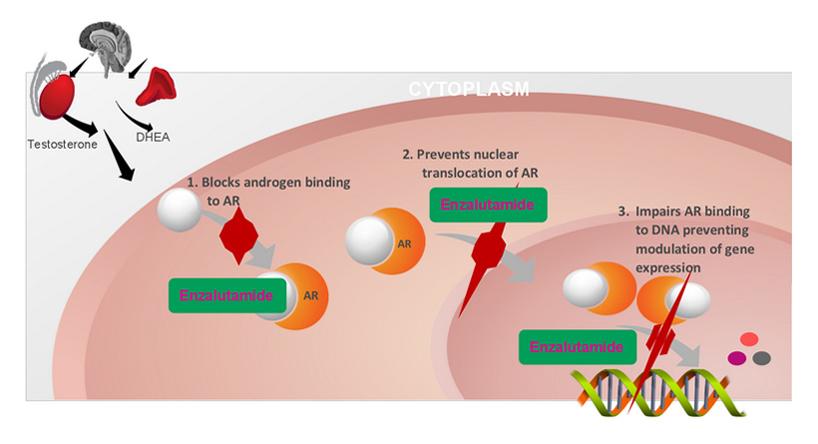 dietiltilbestrolo per pazienti con carcinoma prostatico